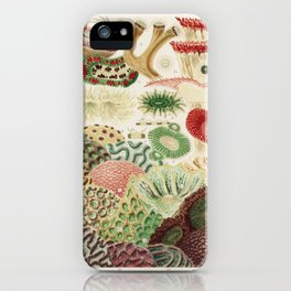 Great Barrier Reef Corals from The Great Barrier Reef of Australia (1893) by William Saville-Kent (1 iPhone Case