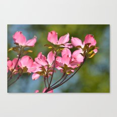 Dogwood Flowers in Spring Canvas Print