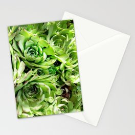 GREEN HENS N' CHICKS SEDUMS-SUCCULENTS Stationery Cards