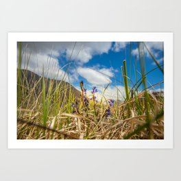 Summer in Connemara mountains Art Print