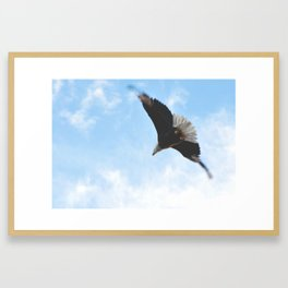 Fly Like An Eagle Framed Art Print