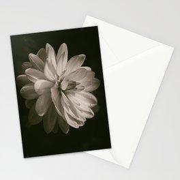 Vintage Velvet Stationery Cards