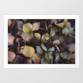 Pale purple hydrangea pattern Art Print