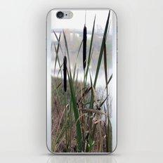 Reeds Seeds iPhone & iPod Skin