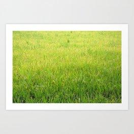 Lush Green Rice field, meadow, rice paddy, rice field, green grass Art Print