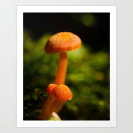 Orange Button Top Mushrooms Nature / Botanical Photograph Art Print