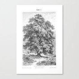 Linden Tree Print from 1800's Encyclopedia Canvas Print