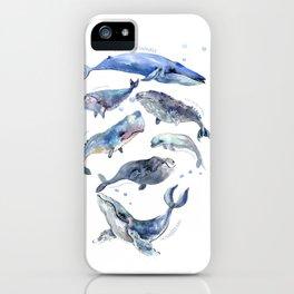 Whales, Whale design, whale wall art, sea, marine aquatic animal art, school learning wall iPhone Case