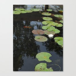 Koi and Water Lillies 2 Canvas Print