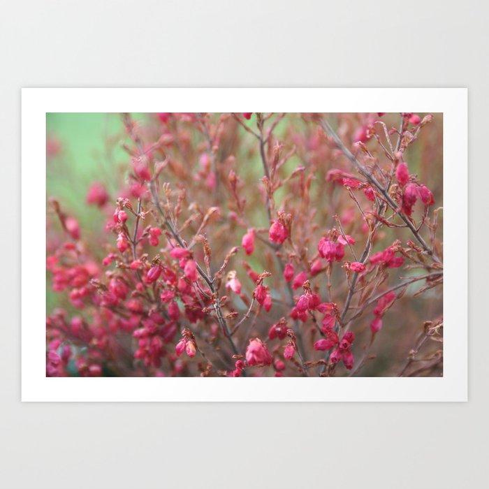 Blooming shrub hot pink flowers art print by annaki society6 blooming shrub hot pink flowers art print mightylinksfo