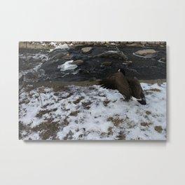 beatiful Goose showing off. Metal Print