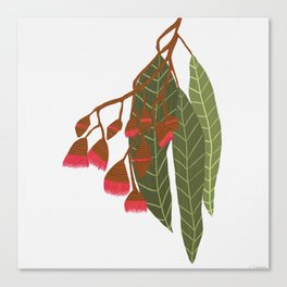 Flowering Gum - White Canvas Print