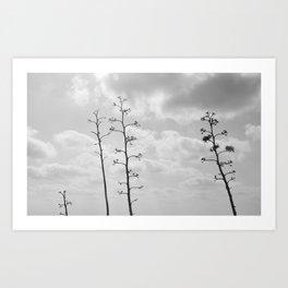 black trees Art Print