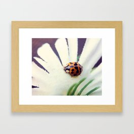 Ladybug On Flower Framed Art Print