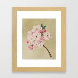 Fukurokuju - God of Longevity Cherry Blossoms Framed Art Print