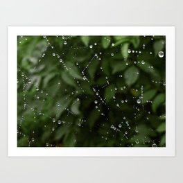 Web dew Art Print