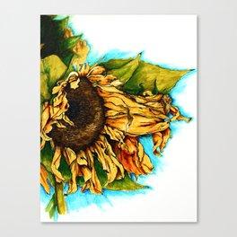 Sunflower in Summer Canvas Print
