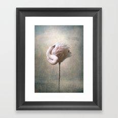 Sleeping Flamingo  Framed Art Print