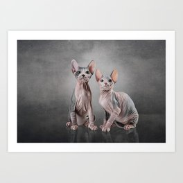 Drawing two cats Sphynx, hairless Art Print