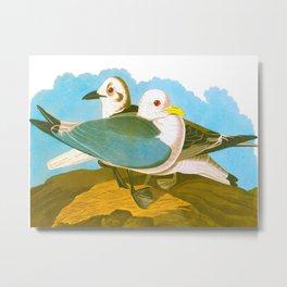Kittiwake Gull Metal Print