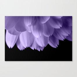 Ultra violet purple flower petals black Canvas Print