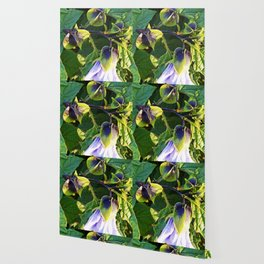 Shoo Fly - Apple of Peru - Nicandra Wallpaper
