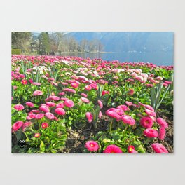 The flowers Canvas Print