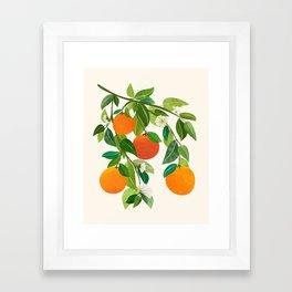 Oranges and Blossoms II / Tropical Fruit Illustration Framed Art Print