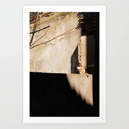 Cat in the Spanish Sun Art Print