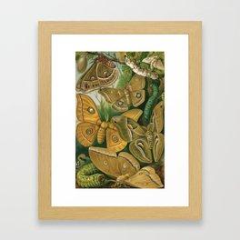 Moths & Caterpillars Framed Art Print