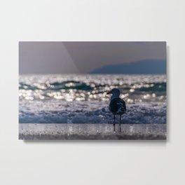 Afternoon Seagull Metal Print