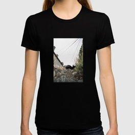 Resting cat in Dubrovnik T-shirt