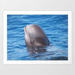Cute wild pilot whale baby Art Print