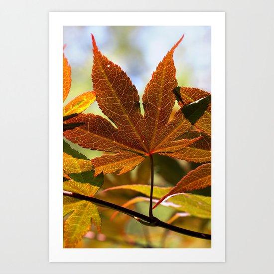Japanese Maple Leaf Art Print