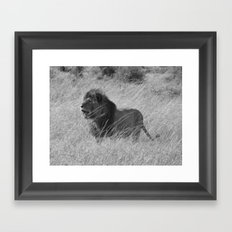 Lion in Maasai Mara Framed Art Print