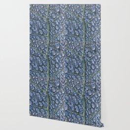 Cool water drops dew texture leaf Wallpaper