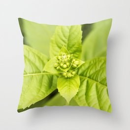 Blue Glory Bower Buds Throw Pillow