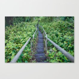 Paths of Green Canvas Print