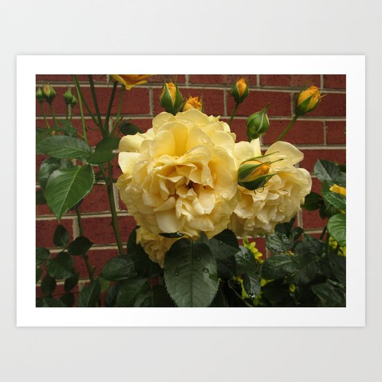 Yellow Beauties  Art Print