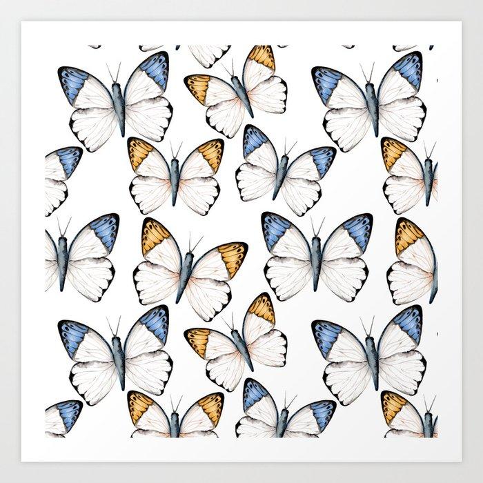 Tropical butterflies  Art Print