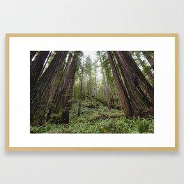 Fern Alley - Redwood Forest Nature Photography Framed Art Print