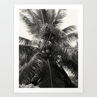 coconut wishes Art Prints featuring Coconut! by Chandon Photography