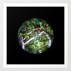 Quetzal Medallion Art Print