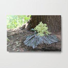 Taxodium Distichum - Baldcypress Metal Print