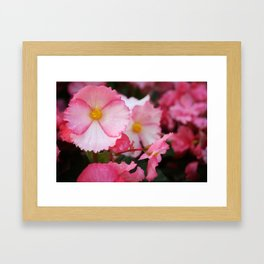Pink and White flowers from Butchart Grdens Framed Art Print