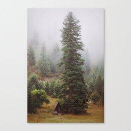 Towering Tree Canvas Print