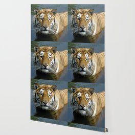 Sibirien Tiger Wallpaper