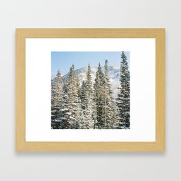Snowbird Framed Art Print