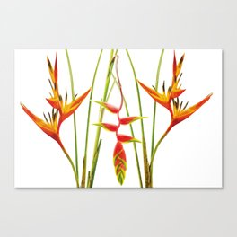 3 Exotic Jungle Flowers Helikonias white background Canvas Print