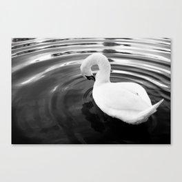 White swan. Canvas Print